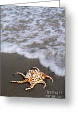 Spider Conch Shell Greeting Card