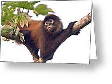 Spider Monkey Greeting Card