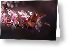 Spring Beauty- 2 Greeting Card