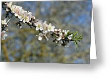 Spring Blooming. Greeting Card