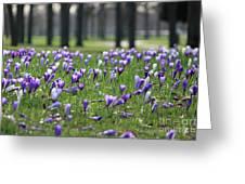 Spring Flowering Crocuses Greeting Card