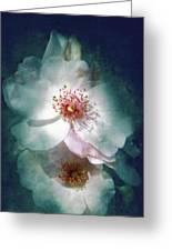 Spring Flowering Greeting Card
