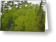 Spring Green Greeting Card