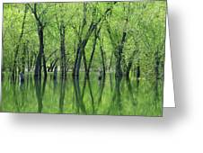 Spring Green Reflections  Greeting Card by Lori Frisch