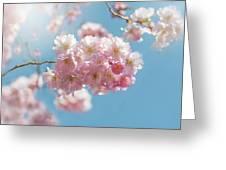 Spring Pinks Greeting Card