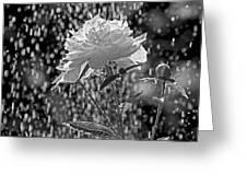 Spring Rain - 365-13 Greeting Card