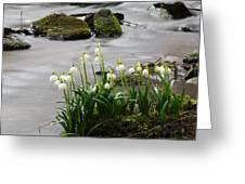 Spring Snowflake Greeting Card