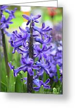 Spring Time With Blooming Hyacinth Flowers In A Garden Greeting Card