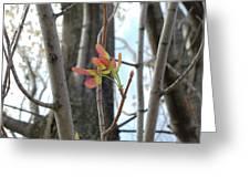Spring Whirligig Greeting Card
