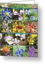Spring Wildflowers II Greeting Card