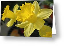 Spring Yellow Greeting Card