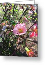 Springtime In The South Greeting Card