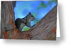 1- Squirrel Greeting Card