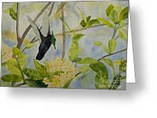 St. Lucian Hummingbird Greeting Card