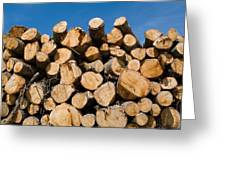 Stack Of Wooden Logs In The Landes Forest Greeting Card by Sami Sarkis