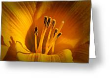 Stamens Greeting Card