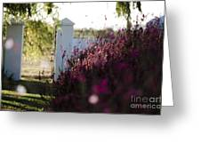 Cape Farm Courtyard  Greeting Card