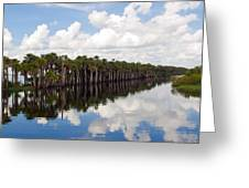 Stick Marsh In Fellsmere Florida Greeting Card