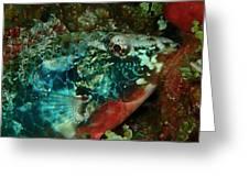 Stop Light Parrot Fish Greeting Card
