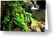 Stream El Yunque National Forest Greeting Card