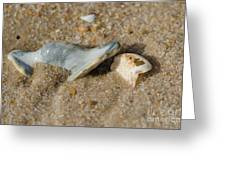 Stuck In The Sand Greeting Card