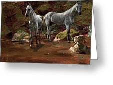 Study Of Wild Horses Greeting Card