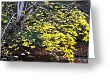 Sugar Maple Birch River Greeting Card