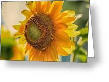 Summer Morning Greeting Card