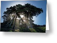 Sunbeams From Large Pine Or Fir Trees On Coast Of San Francisco  Greeting Card