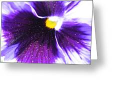 Sunburst Pansy Greeting Card