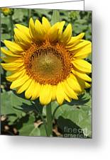 Sunflower 09 Greeting Card