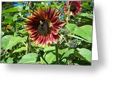 Sunflower 133 Greeting Card