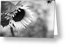 Sunflower Garden Greeting Card