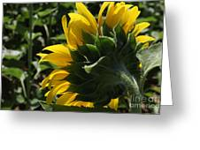 Sunflower Series 09 Greeting Card