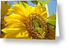 Sunflowers Art Prints Sun Flower Giclee Prints Baslee Troutman Greeting Card