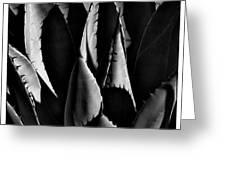 Sunlit Cactus Greeting Card