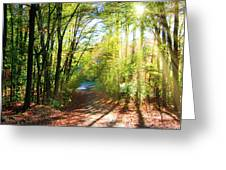 Sunny Autumn Path Greeting Card