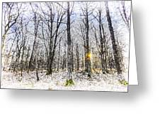 Sunrise Snow Forest Art Greeting Card
