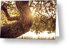 Sunset On A Tree Greeting Card