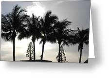 Sunset Thru The Trees Greeting Card