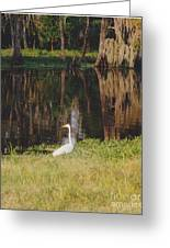 Swamp Bird Greeting Card