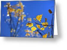 Sweet Autumn Greeting Card