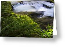 Sweet Creek Oregon 11 Greeting Card
