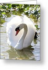 Sweet Swan 2 Greeting Card