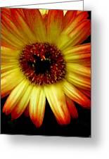 Swish Design Set Greeting Card
