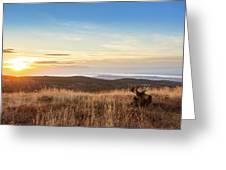 Taking In The Sunset Greeting Card