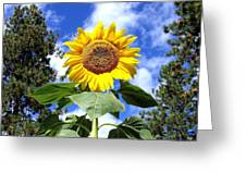 Tall And Sunny Greeting Card