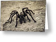 Tarantula Greeting Card