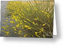 Tarweed Flowering Greeting Card