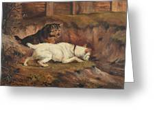 Terriers Ratting Greeting Card